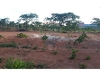 Foto Farm - For Sale - Montes Claros, Minas Gerais