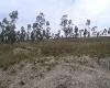 Foto Para proyecto Vivienda Llano Chico 2 hectareas