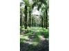 Foto Land/Site - For Sale - Quininde, Esmeraldas