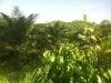 Foto Finca de 110 hectáreas en Quinindé de Palma...