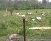 Foto Terreno en Venta en Pedernales Manabi