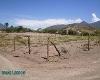 Foto Se vende terrenos con riego de 1000 m2 en...