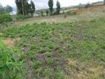Foto Venta Rurales en Quito Sur, Guamani se vende un...