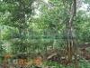 Foto Hermoso Terreno En Venta, En Iquitos, Maynas,...