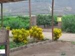 Foto Venta de Terreno de Campo en HUARAL