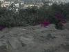 Foto Venta de Terreno de Campo en CHACLACAYO