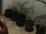 Foto Alquiler de Habitacion en CHORRILLOS