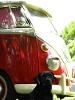 Foto Kombi Luxo Parabrisas Safari Carro Antigo...