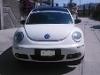 Foto Cambio beetle 10 años -08