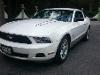 Foto Mustang V6 10