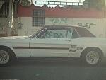 Foto Mustang -67