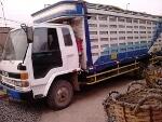 Foto Camion Isuzu igual a Hino Canter condor fuso