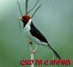 Foto 150 Cantos De Pássaros Cacatua, sabiá, Canário,...
