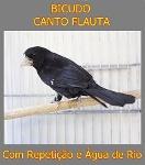 Foto Bicudo Canto Flauta Com Repetição E Água De Rio
