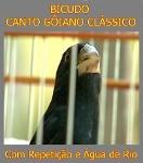 Foto Bicudo Canto Gôiano Clássico Com Repetição E...